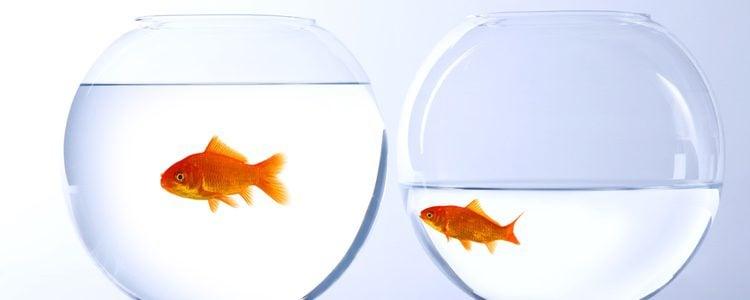 Es muy importante la elección de los peces y conviene no juntar demasiadas especies ya que pueden no ser compatibles