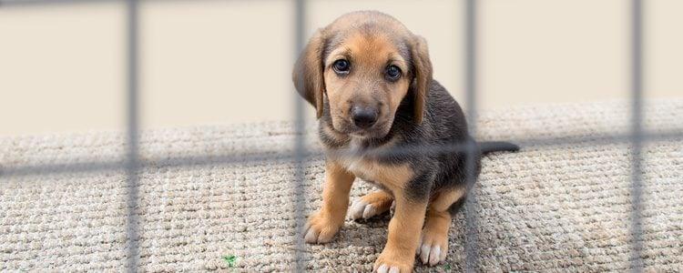 Lo normal es recurrir a un veterinario para que realice el sacrificio