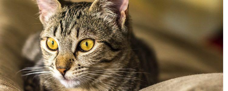Los gatos tienen una agilidad innata que otras mascotas no poseen