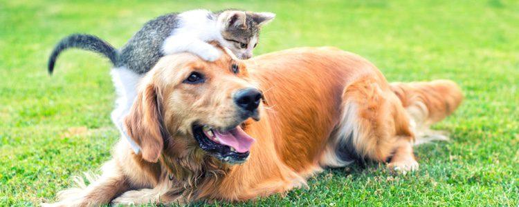 La idea de que los gatos y los perros se llevan mal es rotundamente falsa