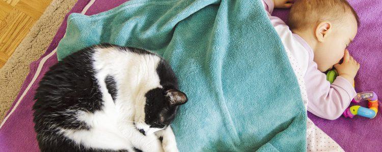 Tener un bebé y un gato no tiene por qué ser motivo de complicaciones