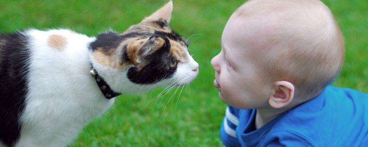 Los gatos distinguen lo que es un bebé y le trataran como a un cachorro, con mimo