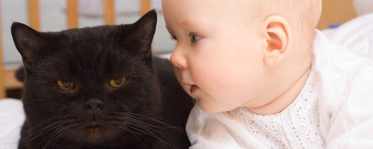 El gato tendrá que pasar unos controles médicos previos antes de juntarlo con un bebé