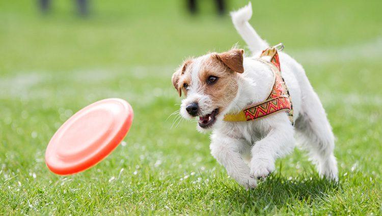 Practicar deporte junto a tu mascota es muy beneficioso para que tus hijos tengan una vida saludable y activa