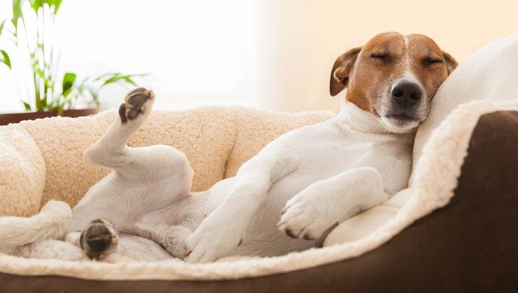 Se aconseja enseñar a los niños a cuidar el lugar en el que sus animales descansen