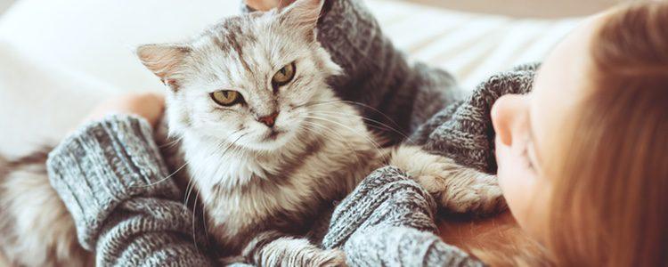 Los gatos son unos animales muy desconocidos, si tienen la cola levantada significará que seremos de su agrado