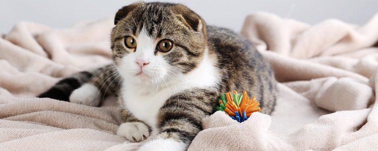Cuando los gatos tengan la cola levantada será un signo de simpatía y de felicidad
