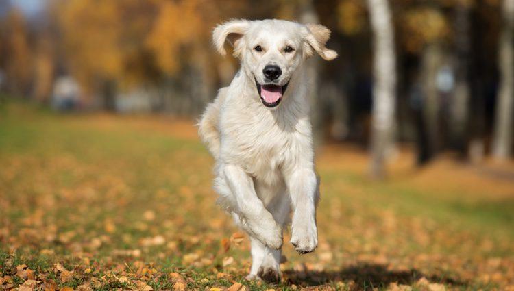 Hay que cuidar la alimentación de nuestro perro a pesar de recuperarse de la infección