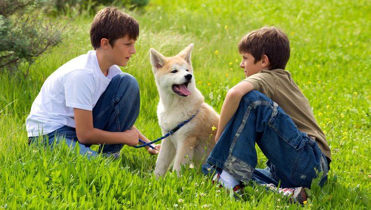 Esta raza de perro se caracteriza por ser muy tiernos, pero también se pueden mostrar agresivos