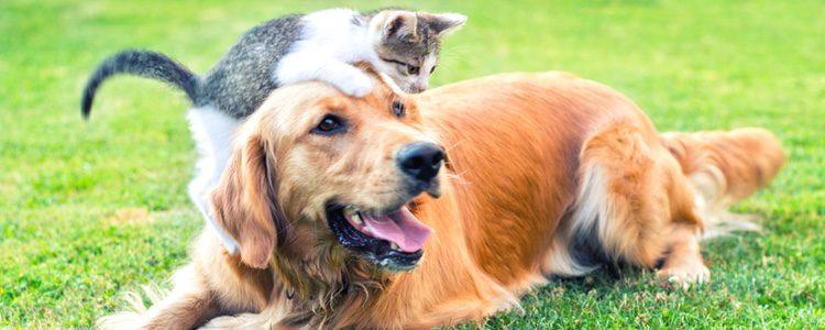 Hay que tener en cuenta todo lo que nos rodea a la hora de adquirir una mascota