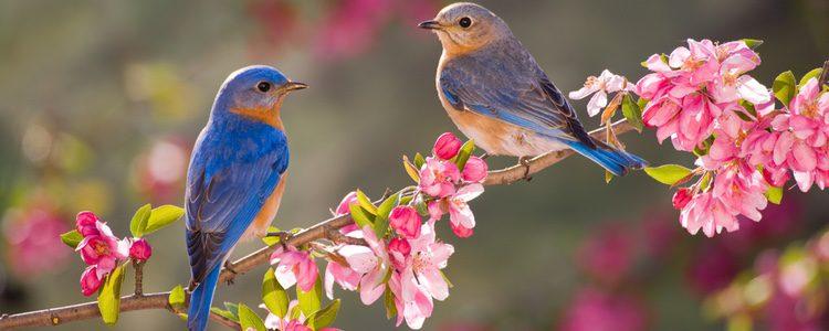 Tener un pájaro como mascota supone poco gasto económico y tiene unos cuidados sencillos