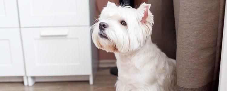 Es normal que tu perro reaccione cuando escuche el timbre de la puerta