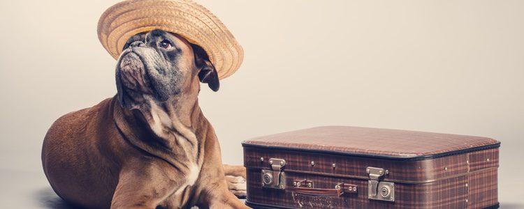 Si tu perro ha estado viviendo en un país cálido y pasa a uno frío notará mucho el cambio