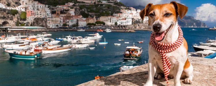 Los perros se terminan acostumbrando al clima en el que se encuentren