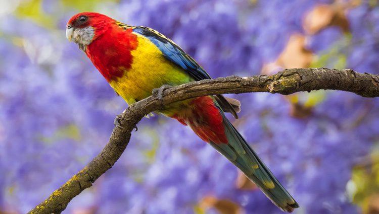 Lo más característico de estas aves son sus plumas y su diversidad de colores