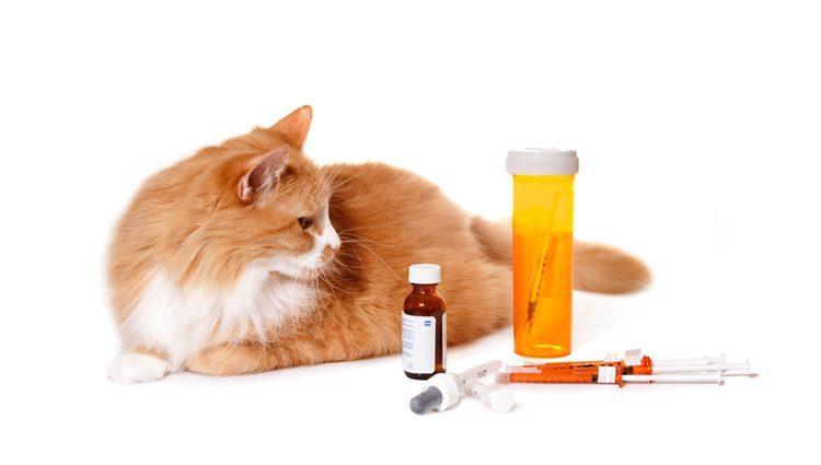 Habrá que aplicar los medicamentos dedicados a este problema