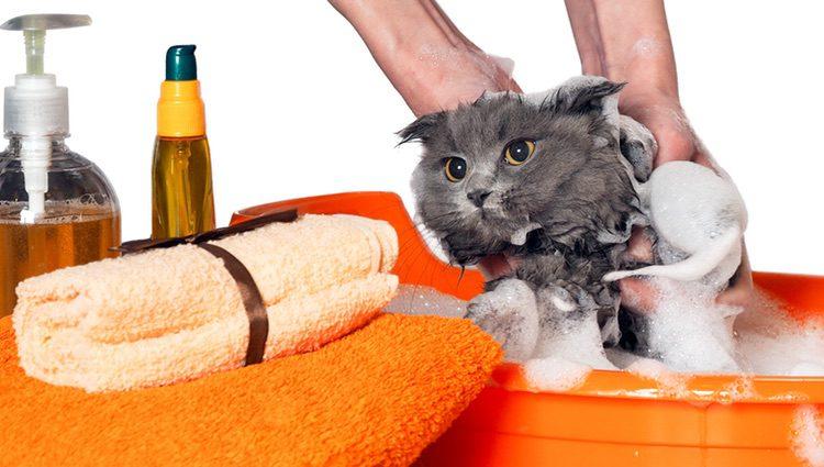 Hay que atender a los champús que aplicamos a nuestra mascota, evitando productos que produzcan alergia