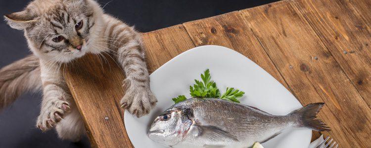 La toxoplasmosis es causada por un parásito que se encuentra en algunos tipos de carne o pescado crudo