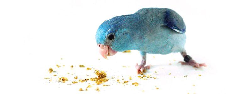 Este animal necesita incorporar a su dieta gran cantidad de proteínas