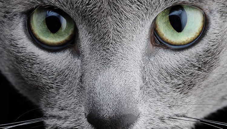 Los ojos de los gatos están preparados para cazar en la oscuridad