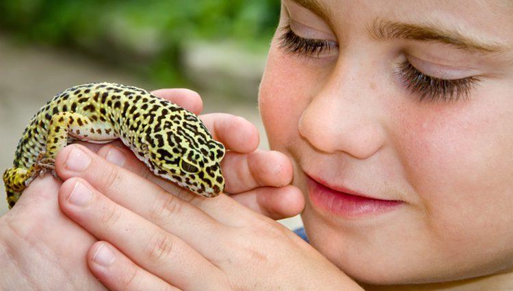 Este tipo de reptil es ideal para jugar con los niños, ya que apenas muerde