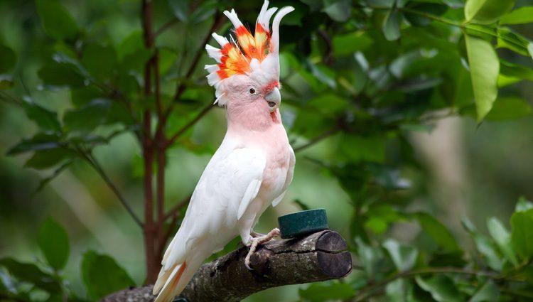 Las cacatúas son unas aves parlanchinas de lo más sociables que pueden alegrar cualquier hogar