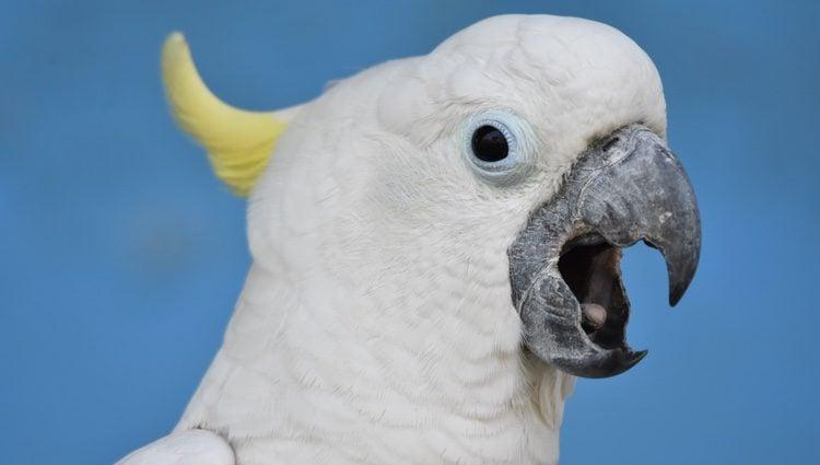 La incubación de los huevos de este tipo de ave la realizan tanto el macho como la hembra