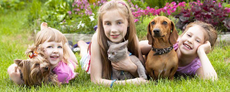 Los animales les encantan a los niños y les enseñan muchas cosas que los humanos no pueden hacer