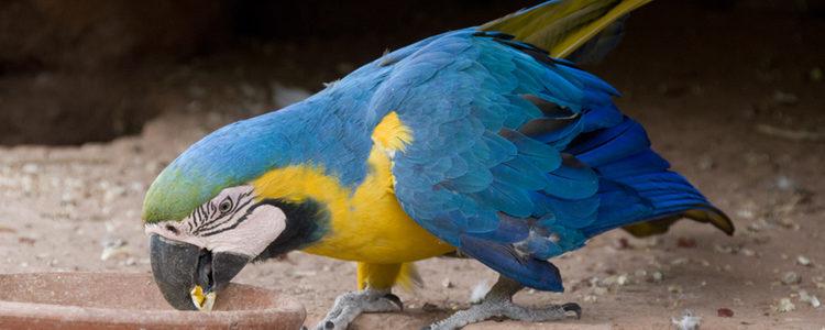 Algunas de estas especies se encuentran en peligro de extinción
