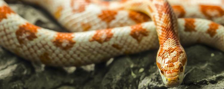 En primer lugar hay que ir a una tienda especializada en reptiles