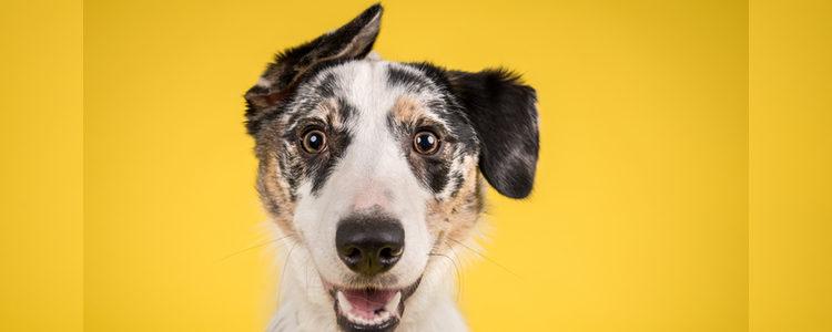 Quizá prefieras centrarte en otras cosas menos sentimentales para nombrar a tu perro