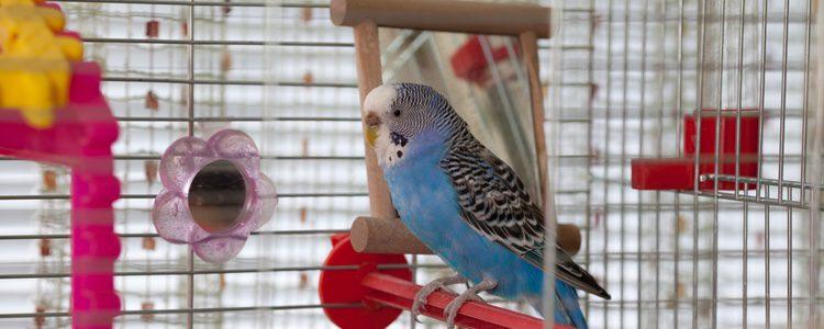 Personaliza tu jaula de pájaro de manera original y divertida