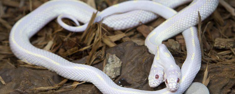 Hay que conocer correctamente las características de cada animal y el tipo de hábitat que necesitan