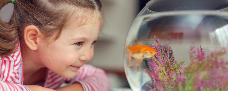 Otro animal que es perfecto para los niños con asma son aquellos como los peces