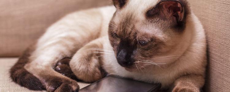 Los gatos también tienen acné