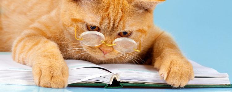 Tu gato debe asociar los sonidos con algo positivo