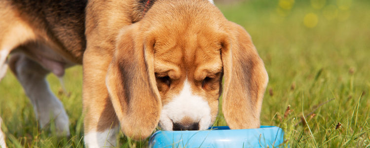 La salud de tu perro es esencial para su felicidad