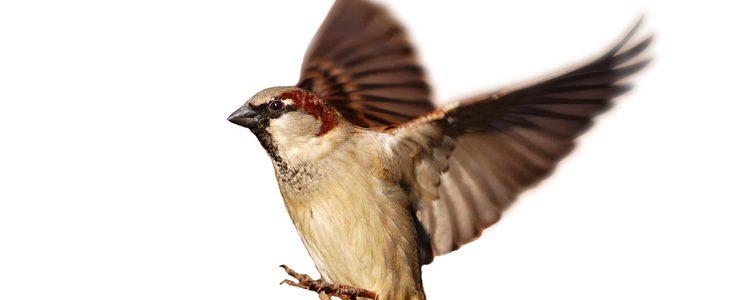 Las enfermedades de los pájaros suelen estar causadas por una mala higiene del animal