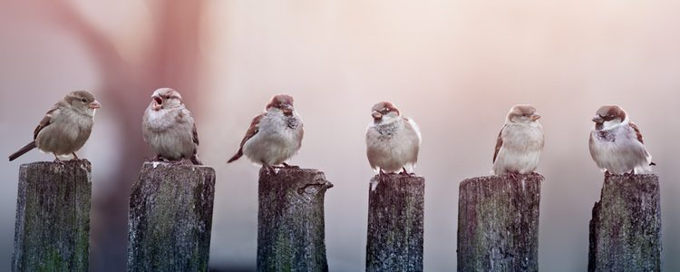 Las aves son los principales animales domésticos