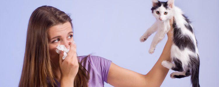 Es muy importante que te plantees si de verdad te quieres enfrentar a una alergia complicada por tener un animal como es el gato en casa