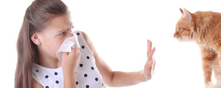 hay que tener precaución para evitar que el gato pase su lengua por el cuerpo del alérgico