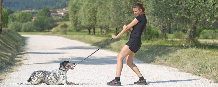 Cuando tu perro no te hace caso, anda hacia el lado contrario