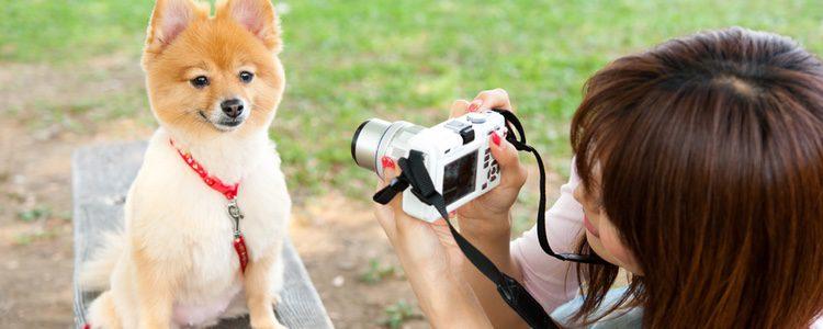 No debes ponerte nervioso a la hora de hacerle buenas fotos