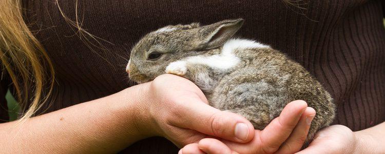 Los conejos son una mascota muy común debido a su fácil cuidado