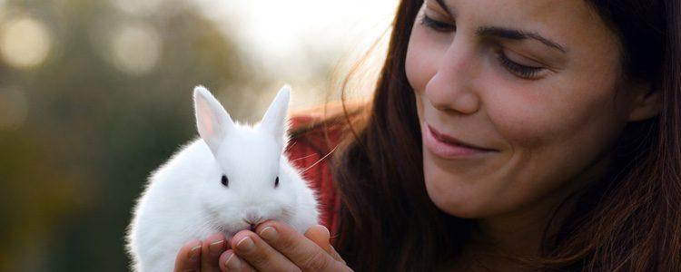 Para el cuidado de un conejo toy es necesario prestar atención a instrumentos dañinos como los cables en casa
