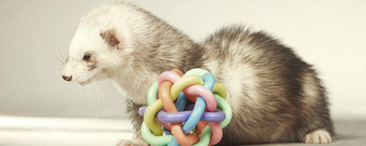 Controla los mordiscos de tu mascota