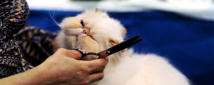 Lo más recomendables para eliminar esta enfermedad es cortar el pelo por la zona afectada
