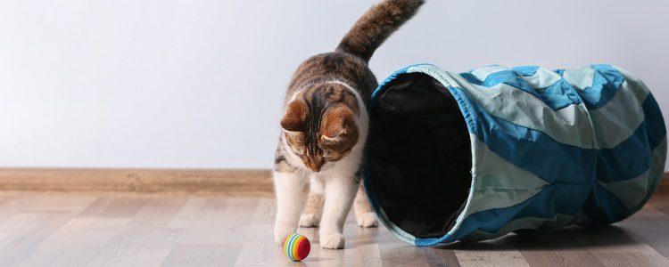 Si el gato come el catnip puede actuar como un sedante para el animal