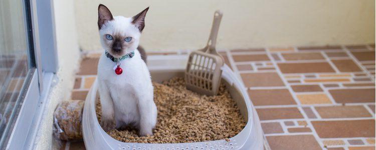 Otro utensilio indispensable si dejas a tu gato solo en casa es dejar limpio el arenero