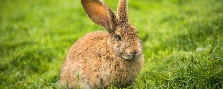 A partir de los 3 meses tu conejo ya puede tomar malta